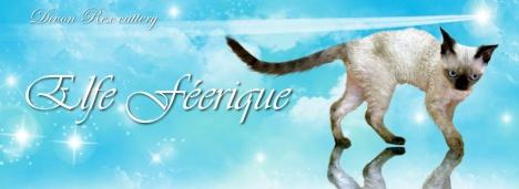 Elfe Féerique - Devon Rex cattery