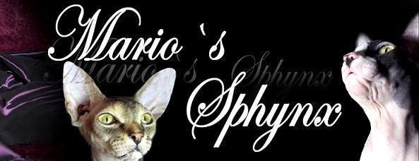 Sphynx Mario's